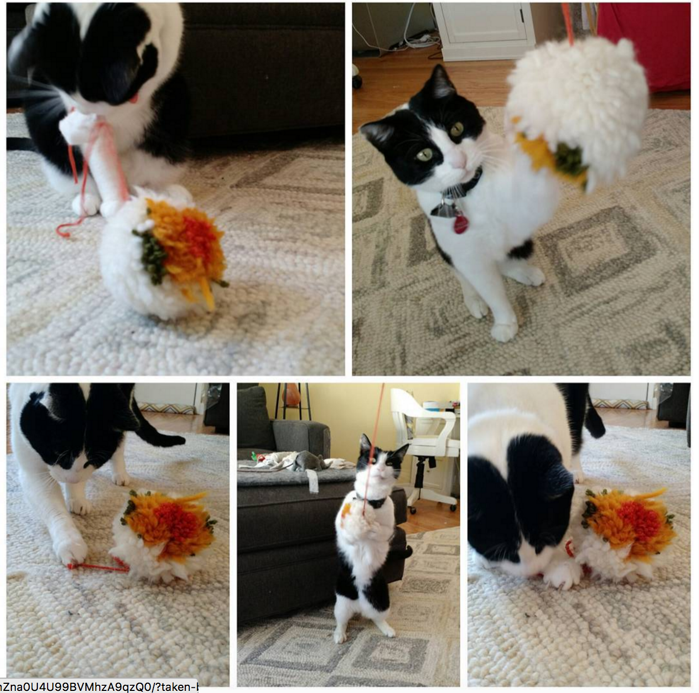 best cat toy ever