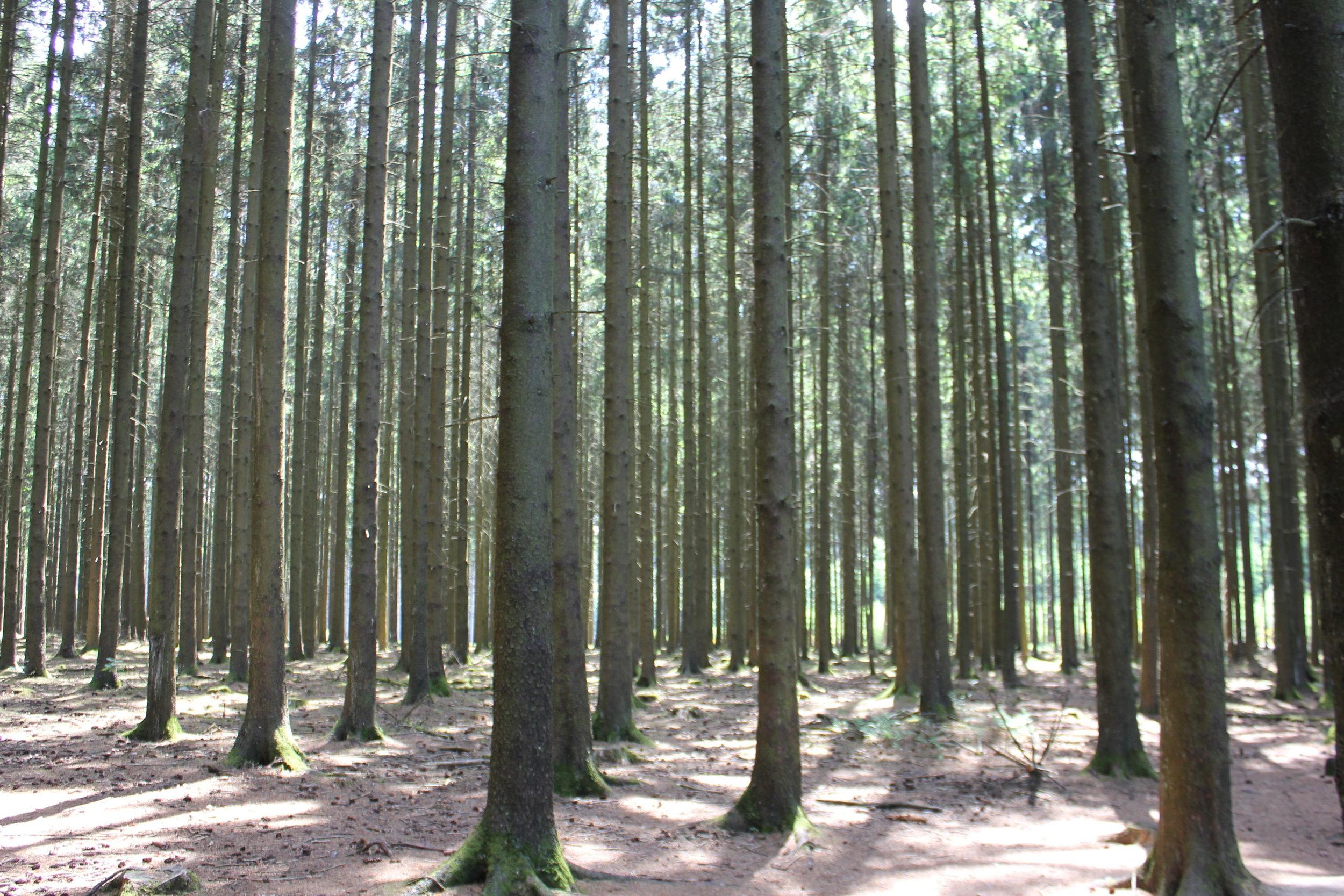 Easy Company woods outside Foy.JPG