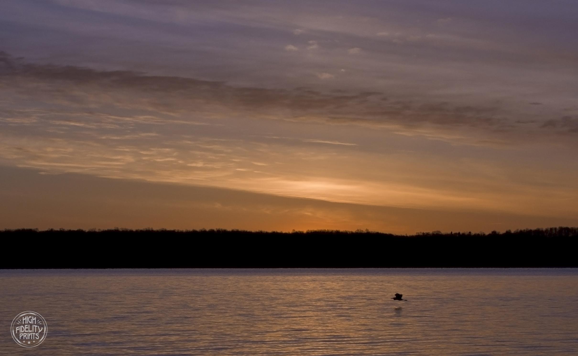 Blue Heron in Flight - Cayuga Lake