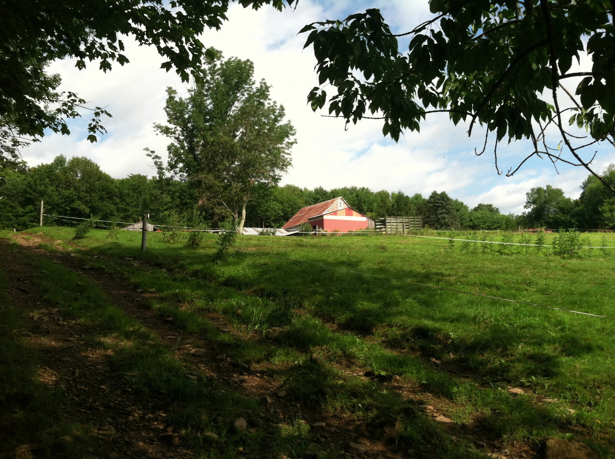 View of Two Loons Farm while putting heifers out to pasture.