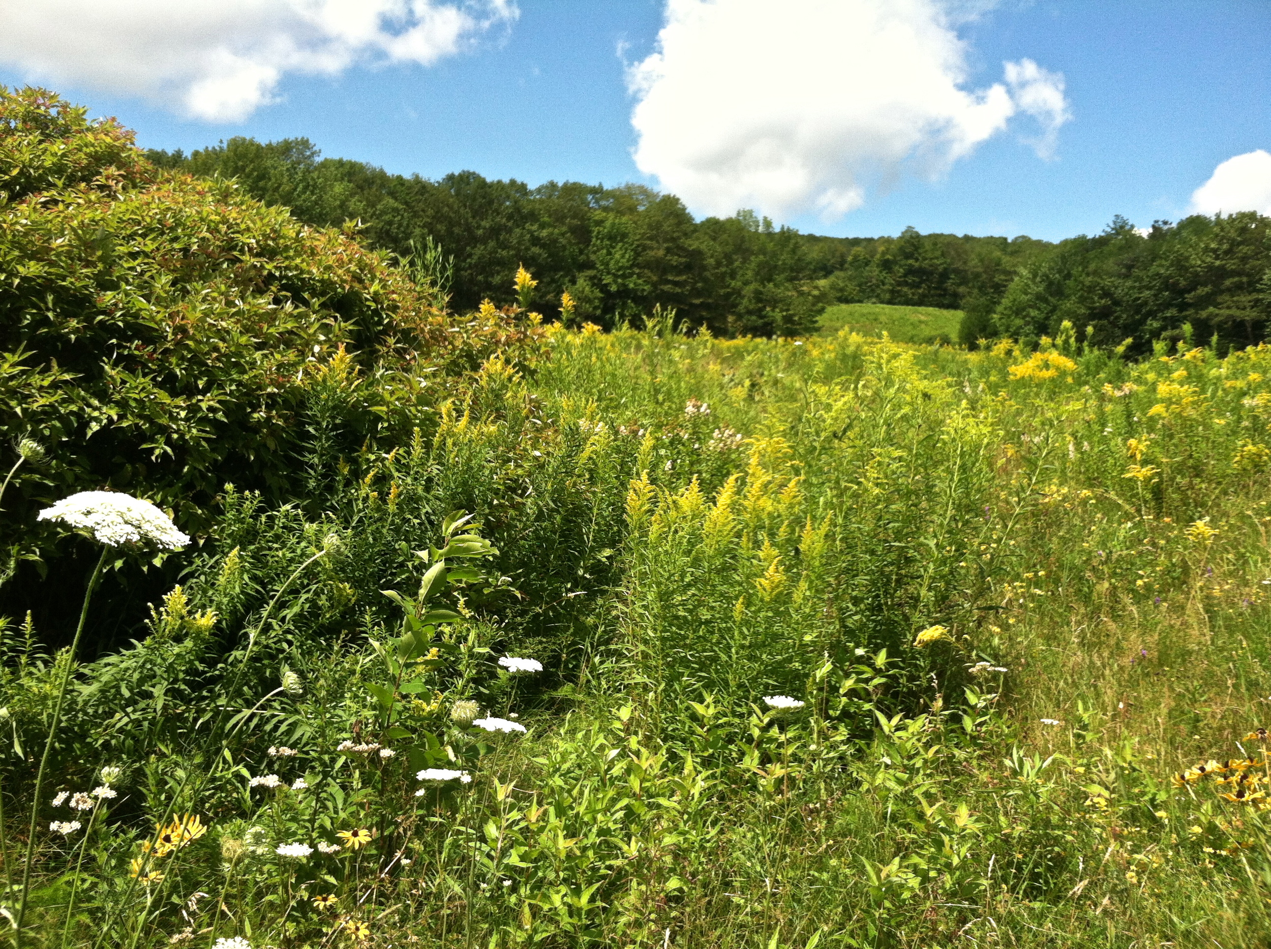 Took some photos of this meadow in Palermo while Andy was taking soft wood cuttings of dogwood for propagation.