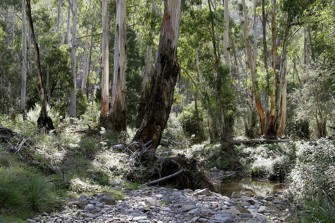 1280px-Australian_bush.jpg