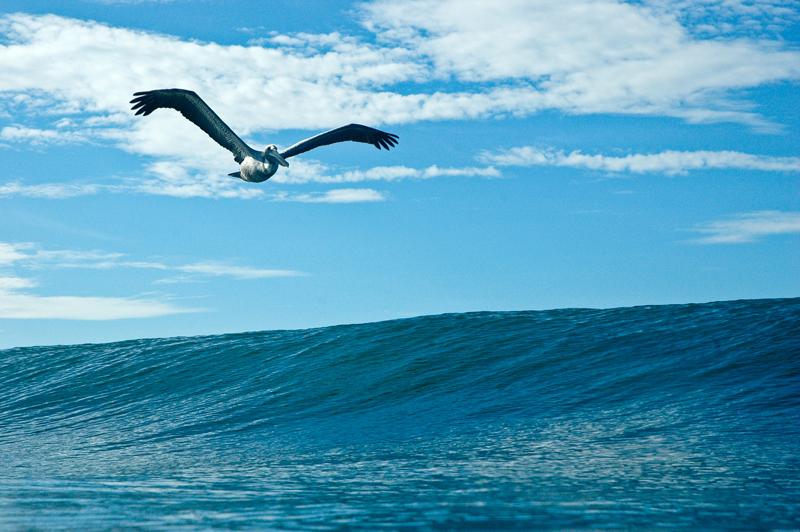 0611_pelican print_001sharp.jpg