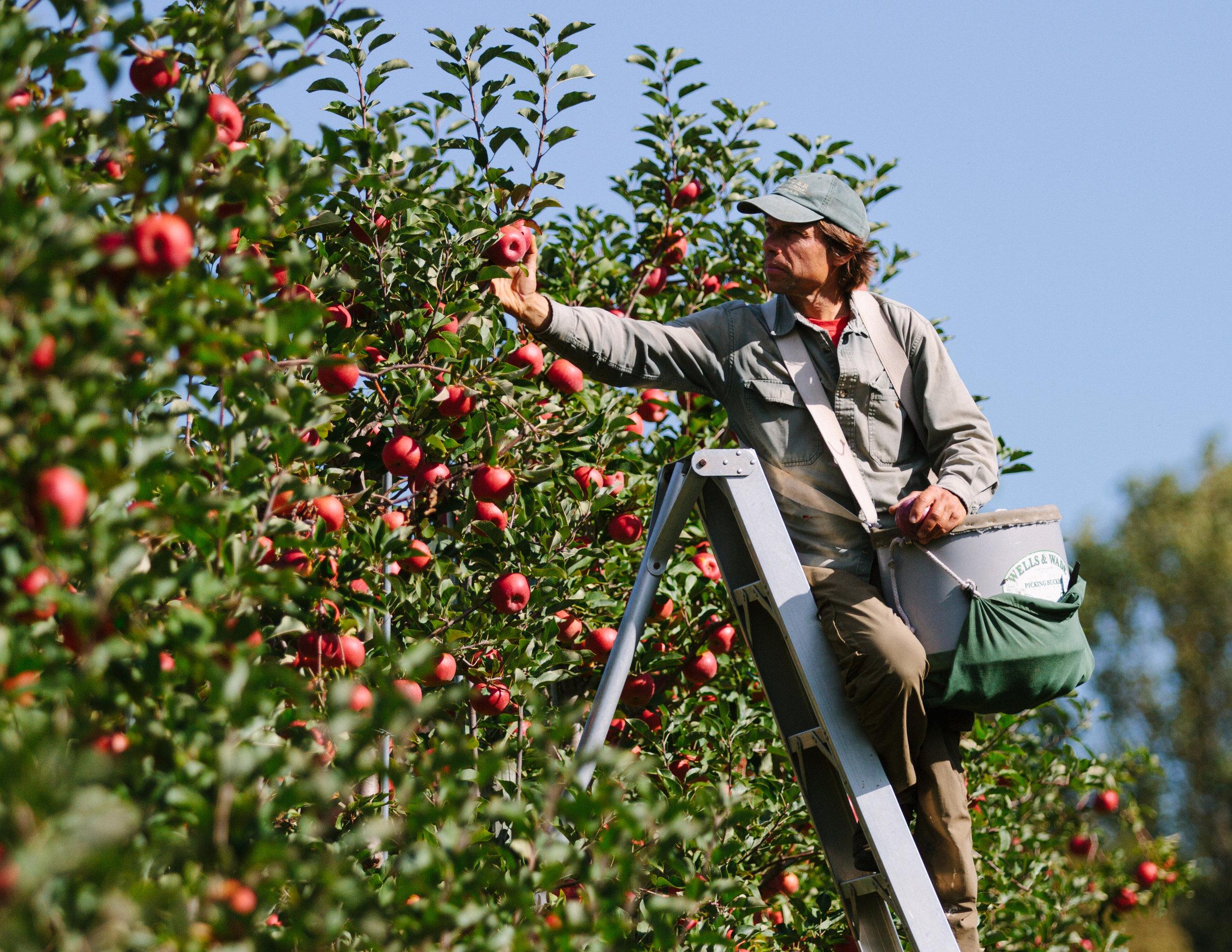 Solebury Orchards, Solebury, PA