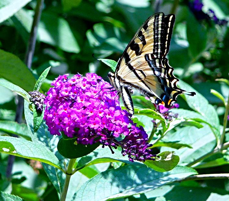 Reiki Precepts Butterfly.jpg