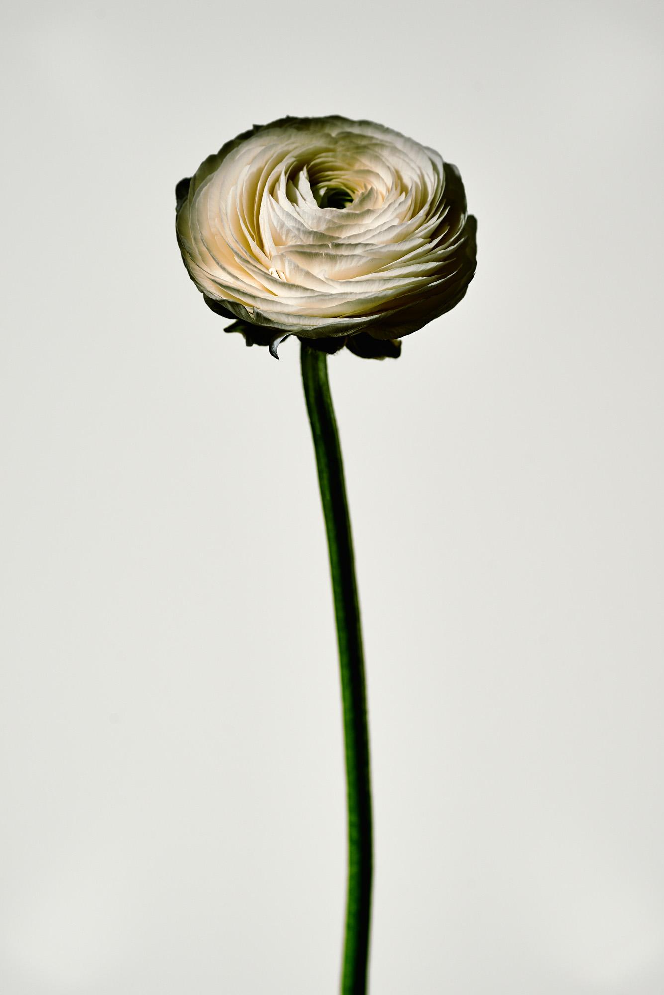 ThingsIlikeonwhite_flowers0537.jpg