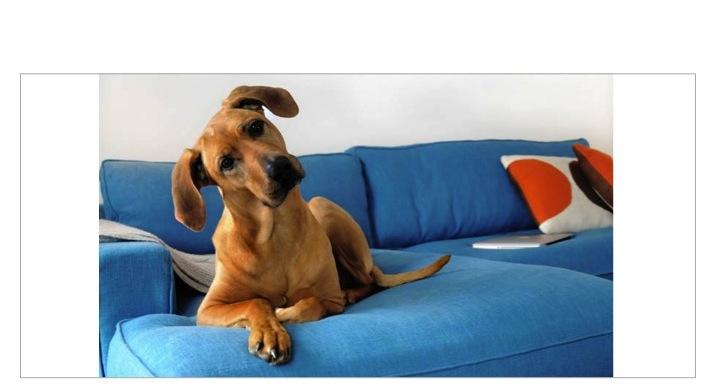 Dog_Sofa
