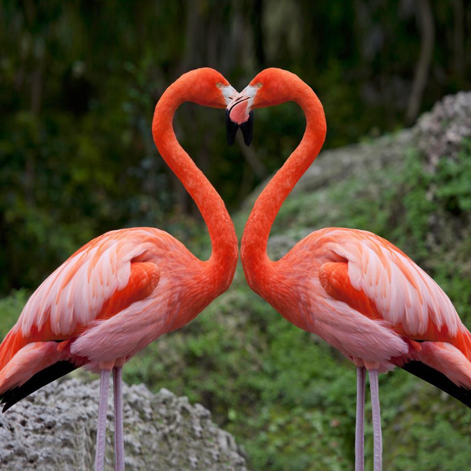 14_Flamingos