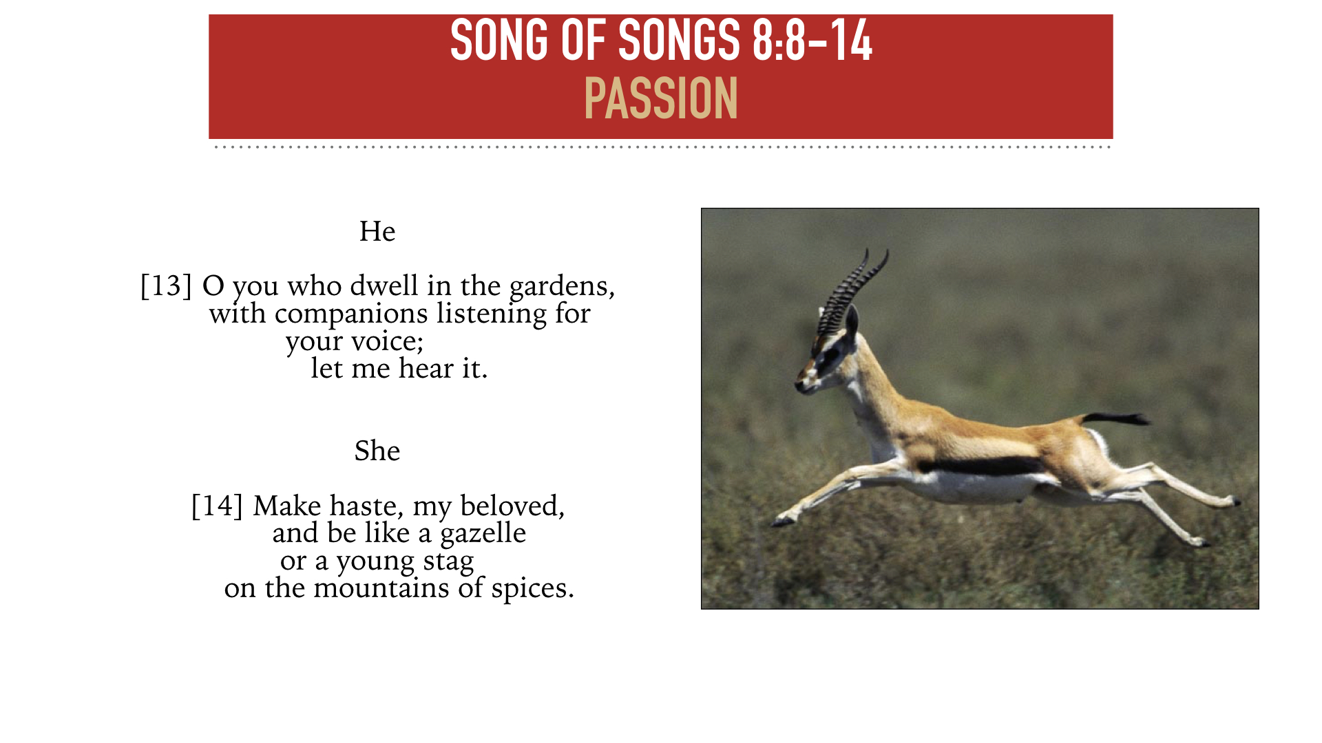 SONG OF SONGS 8:8-14.004.jpeg