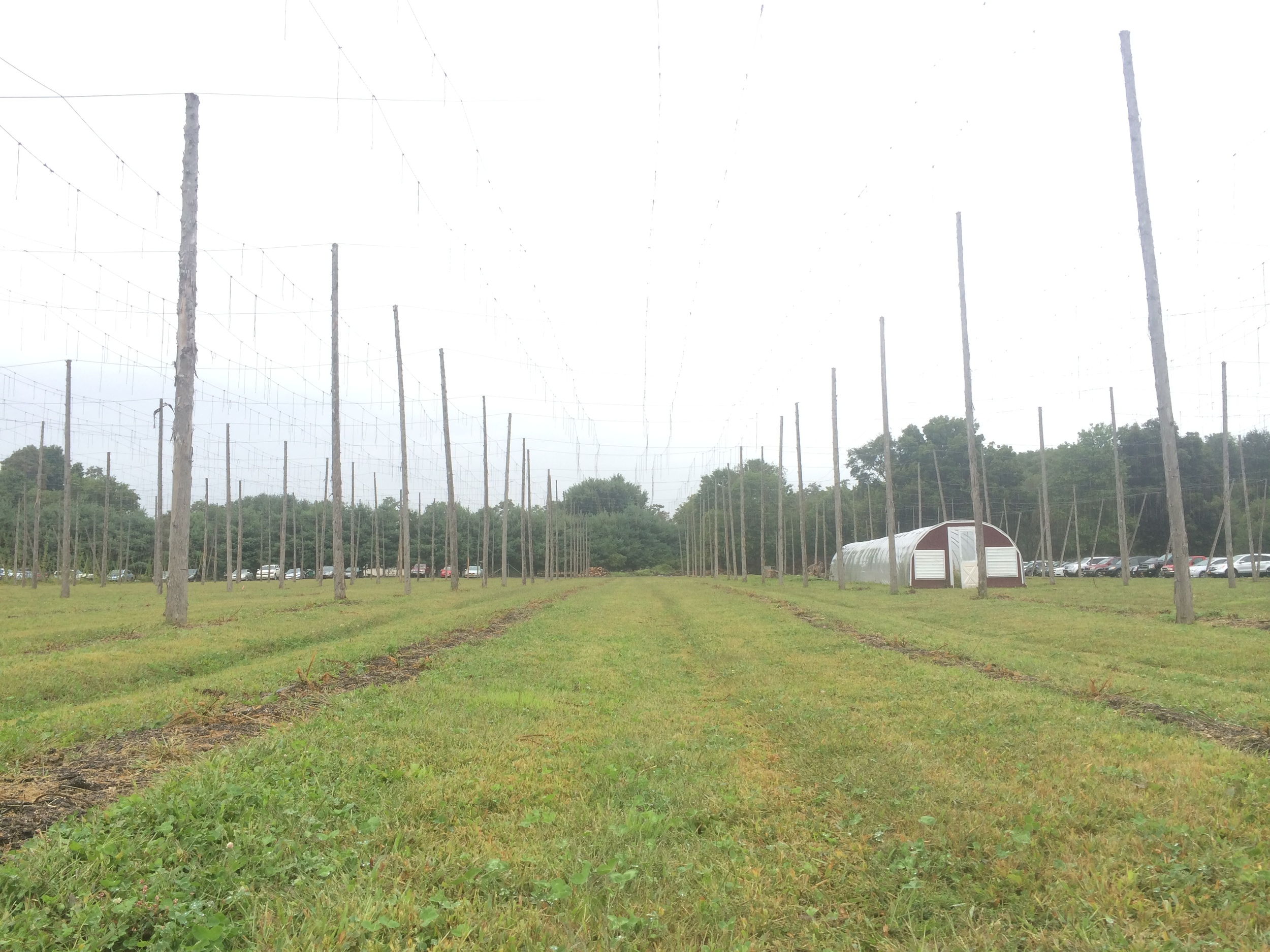 Hops are down for the season