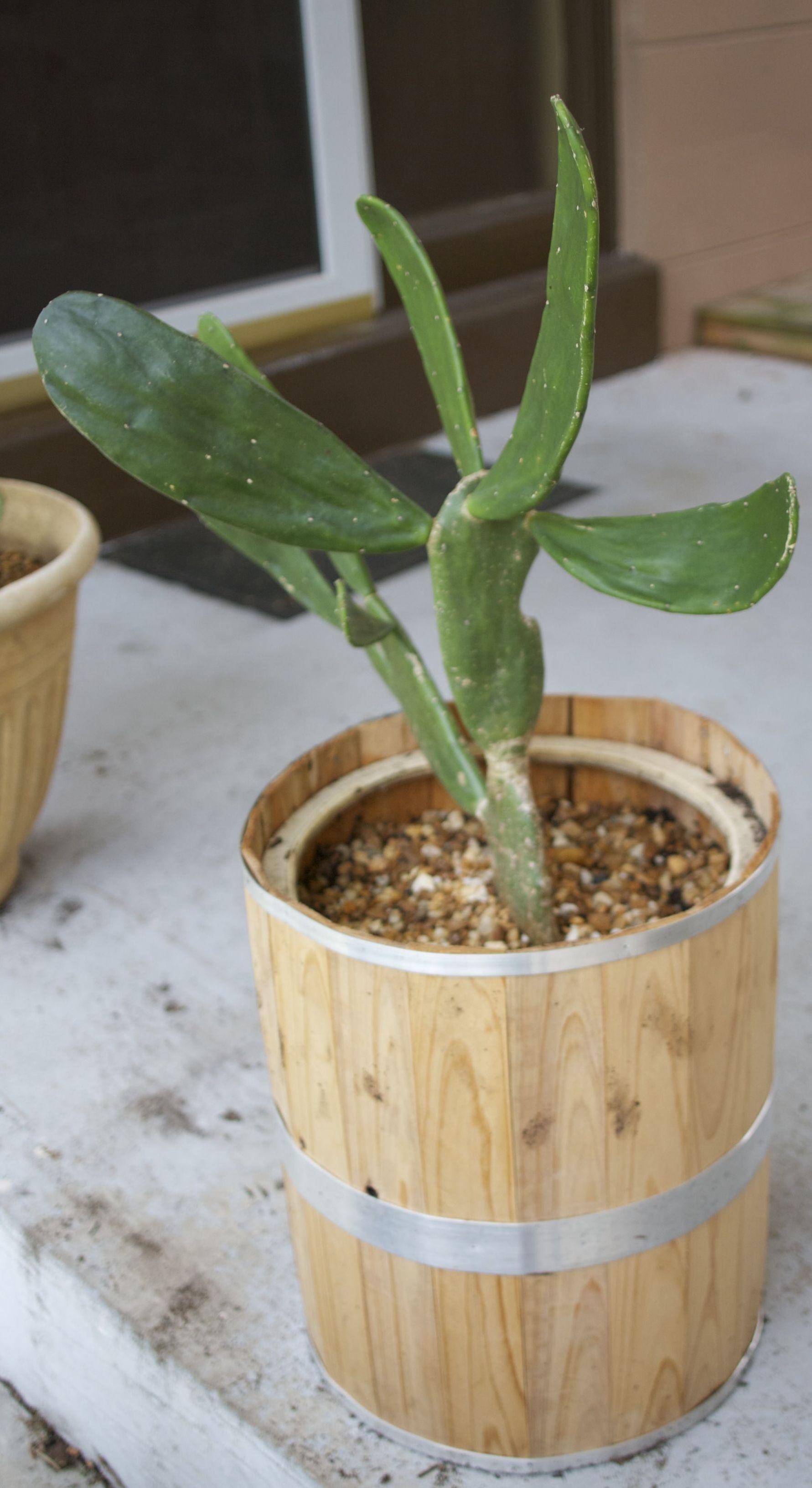 Barrel Planter.jpg