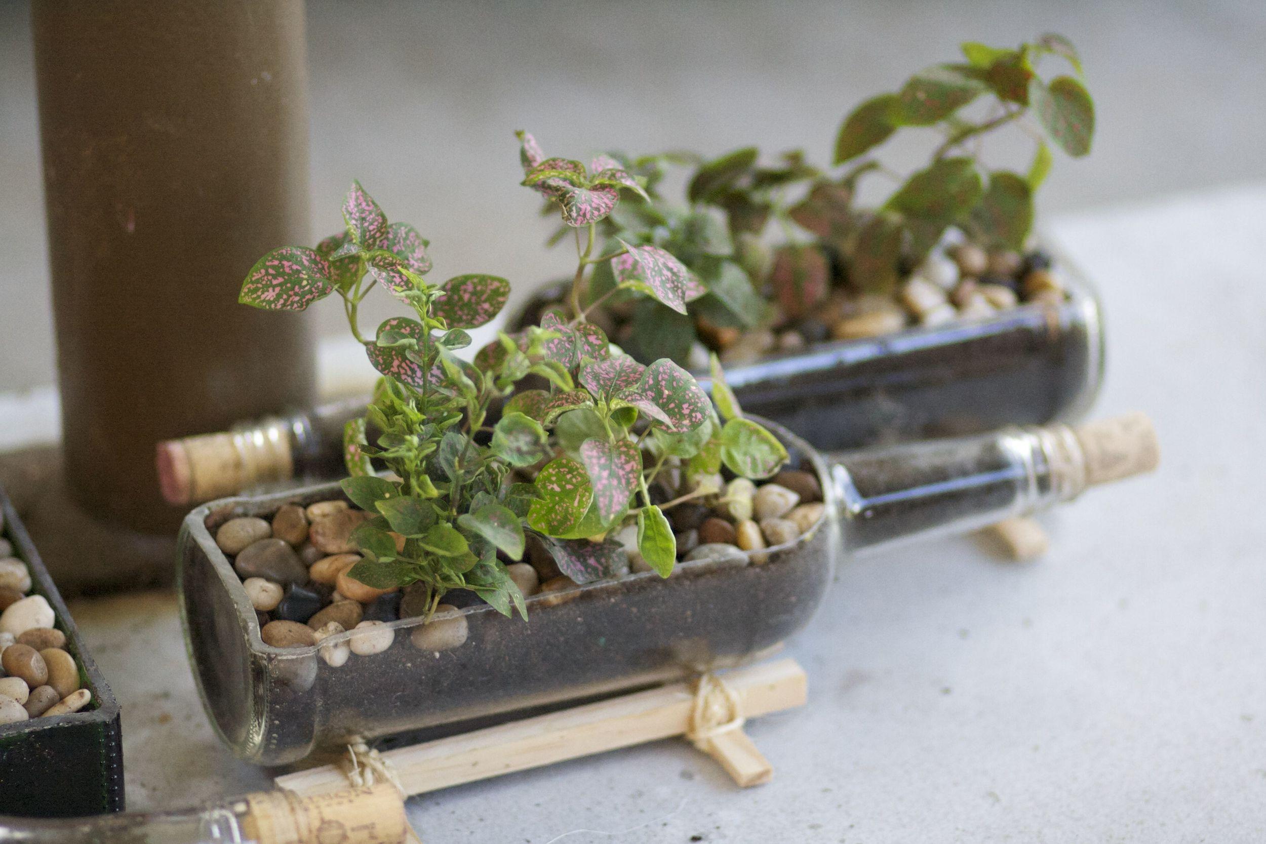 Cut Wine Bottle Planters 2.jpg