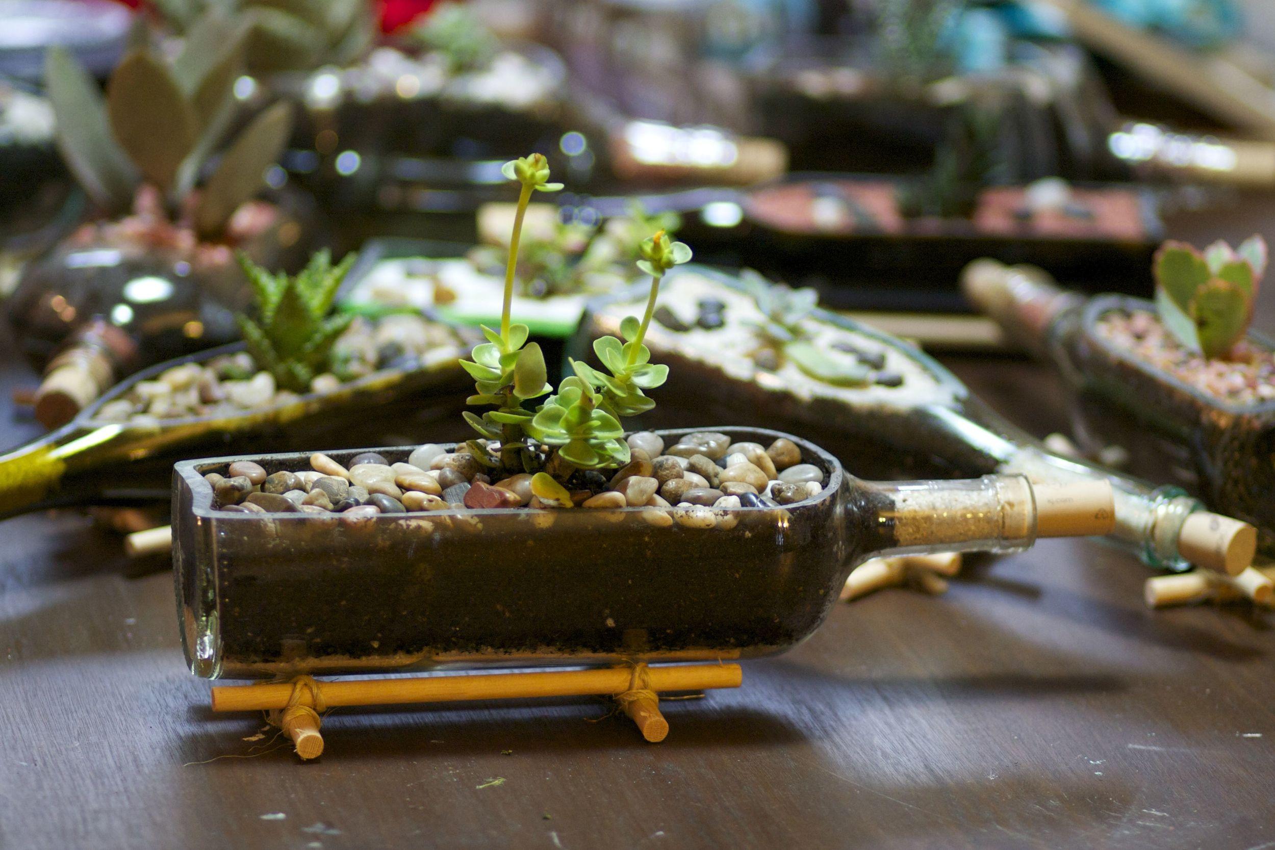 Wine Bottle Succulent Holders