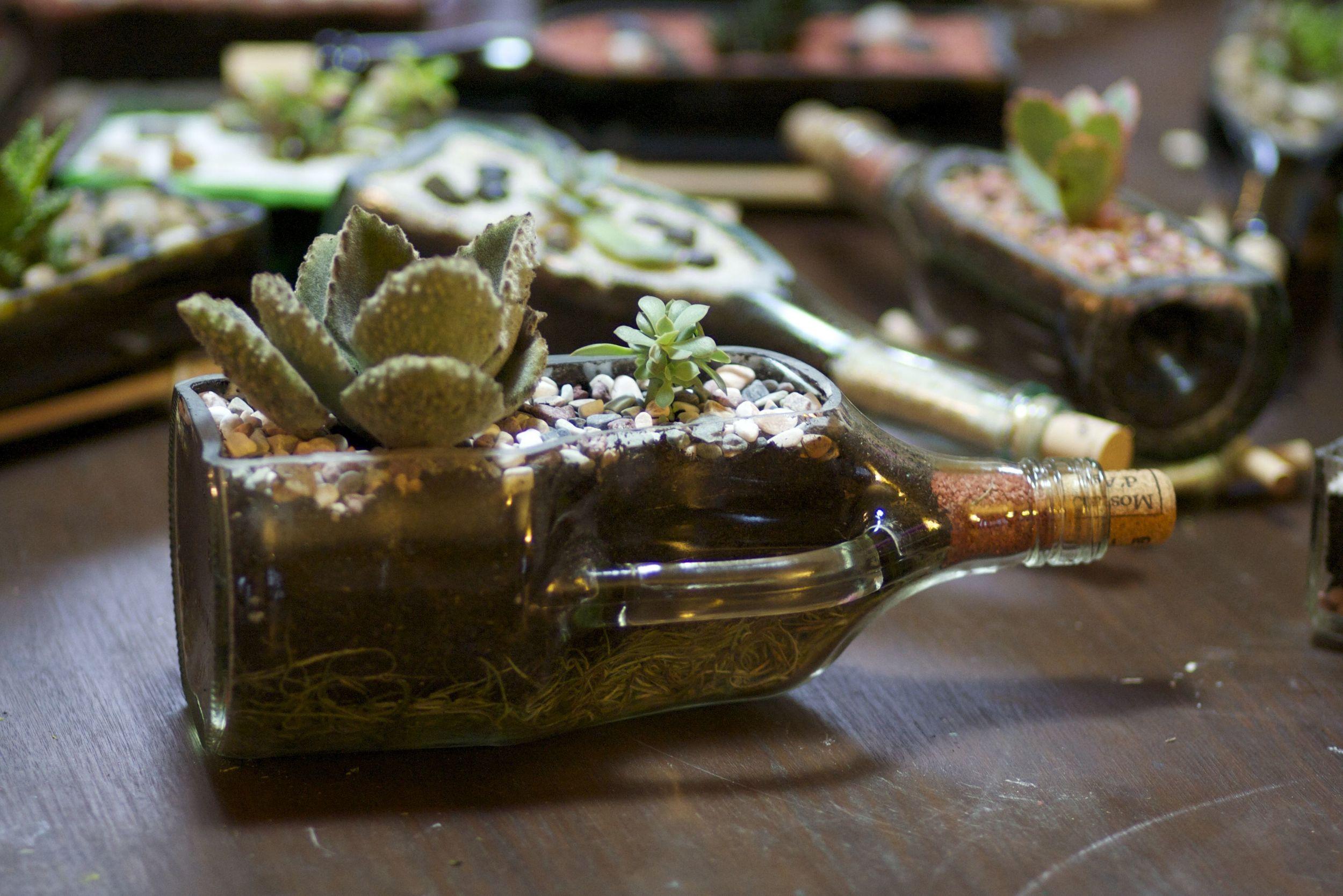 Liquor Bottle Succulent Holders