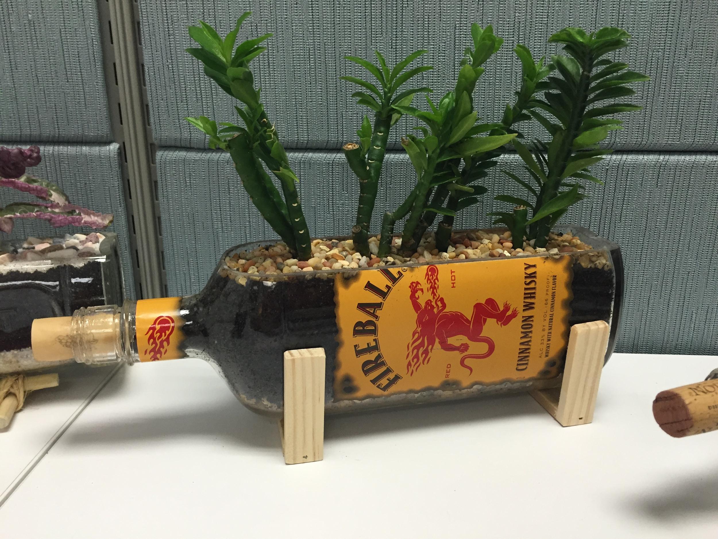 Fireball Bottle Succulent Holder