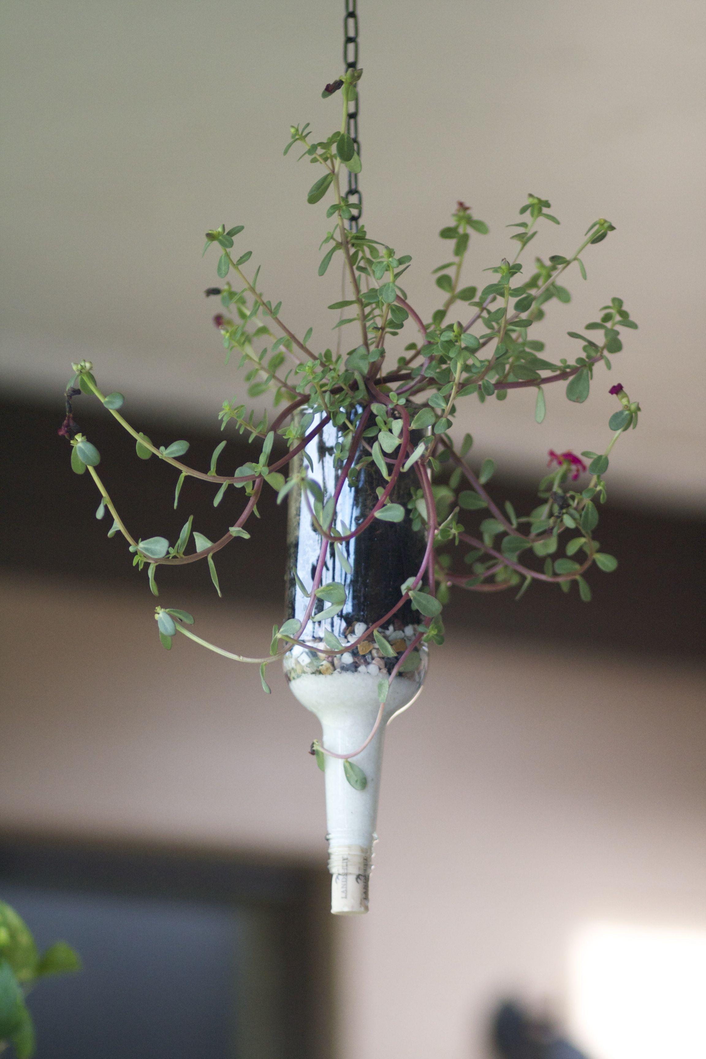 Wine Bottle Succulent Holder