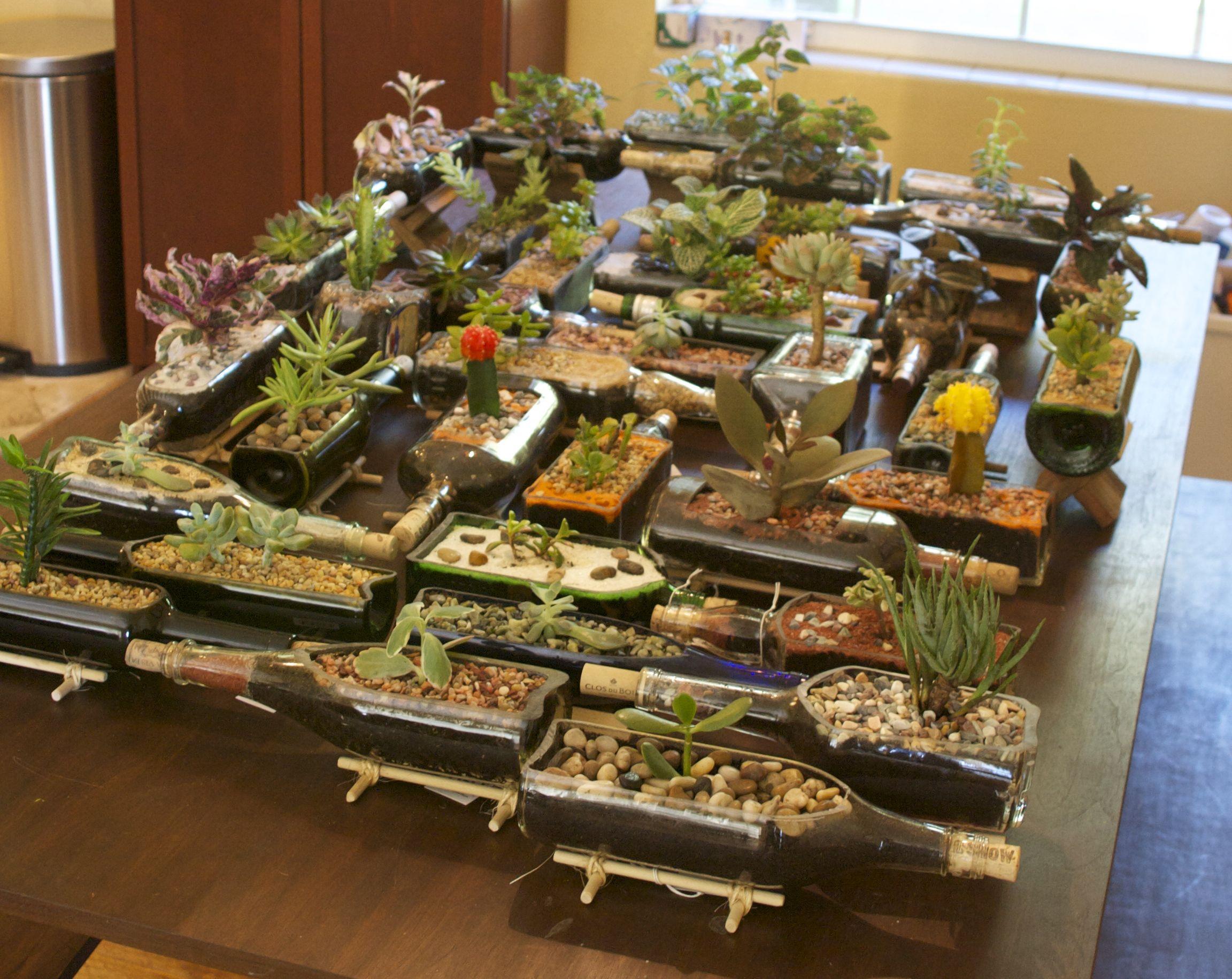 Bottle Succulent Planters