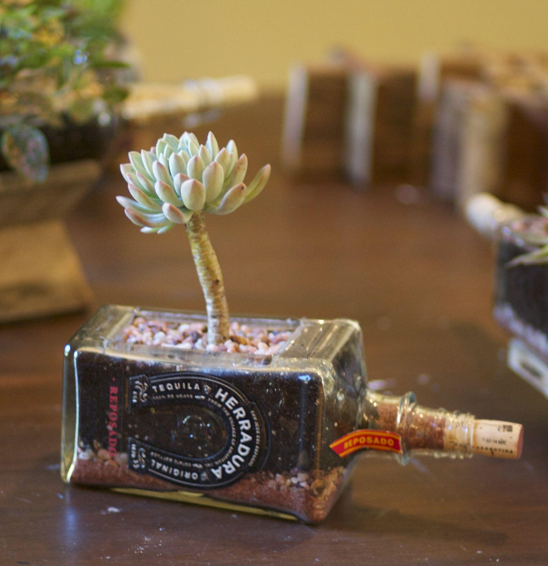 Tequila Bottle Succulent Planter