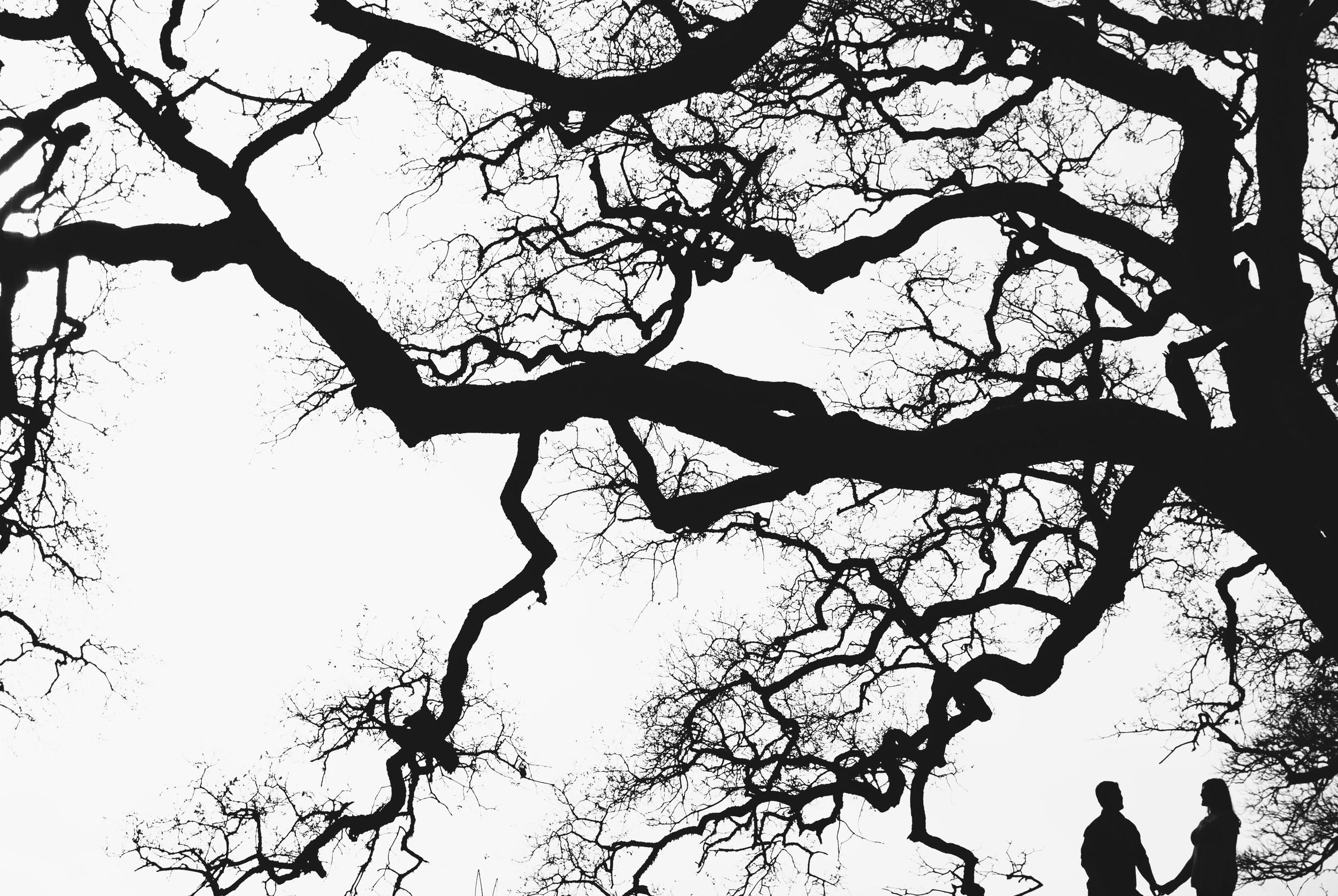 Molly_Tree_bw2.jpg