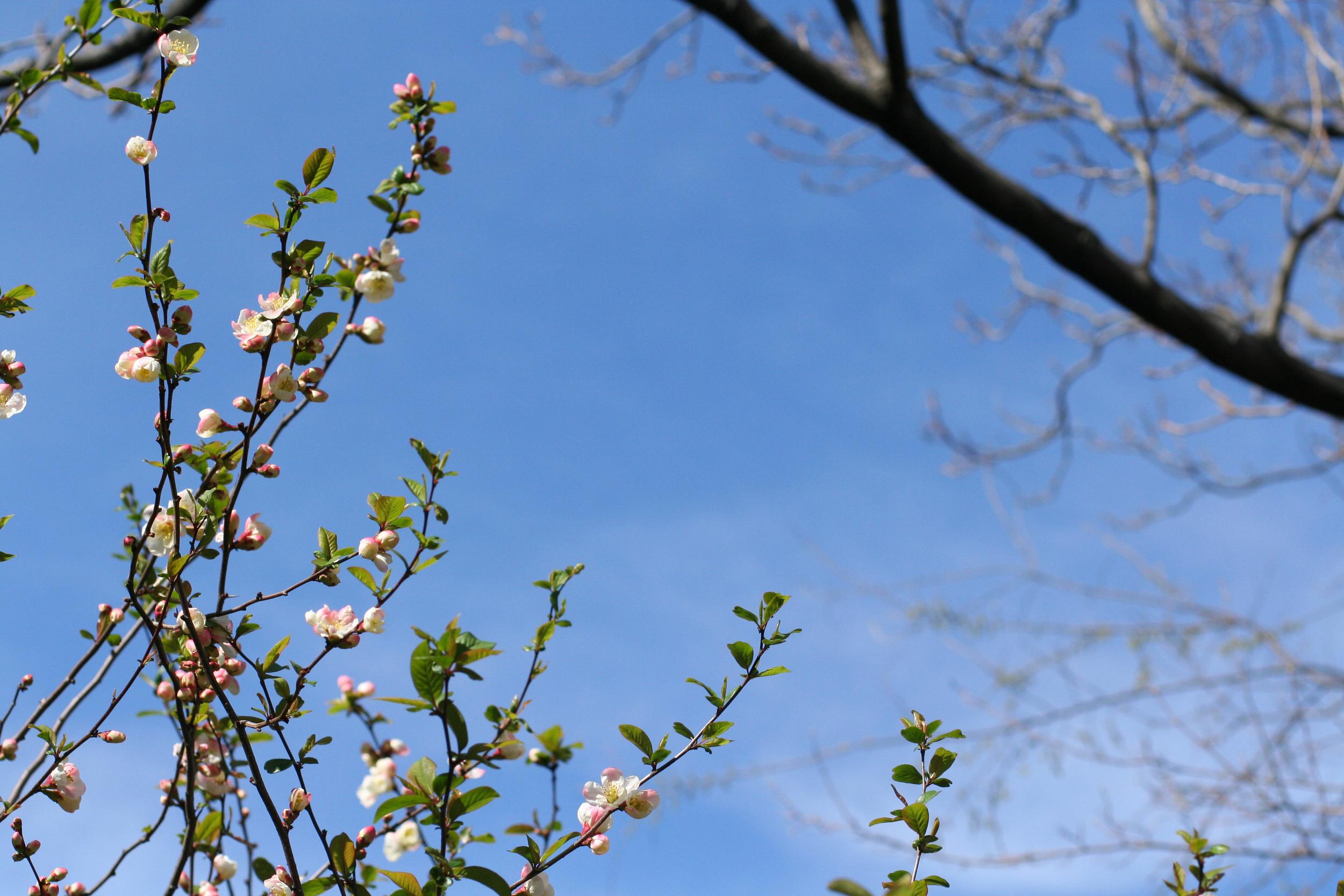 quince sky.jpg