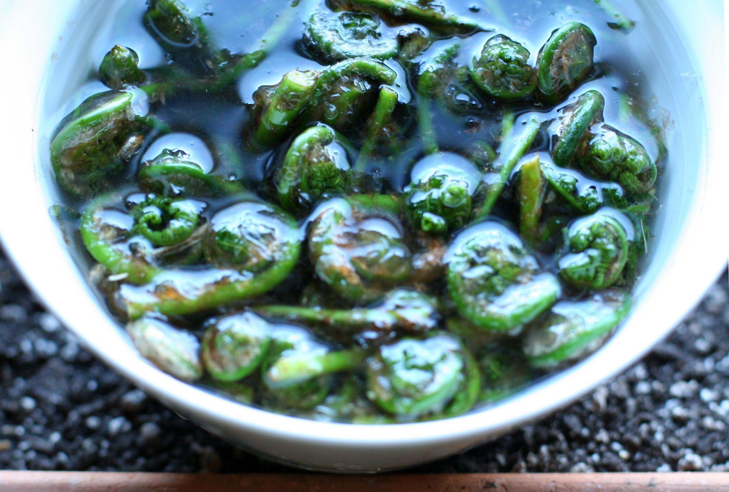 fiddleheads in water.jpg