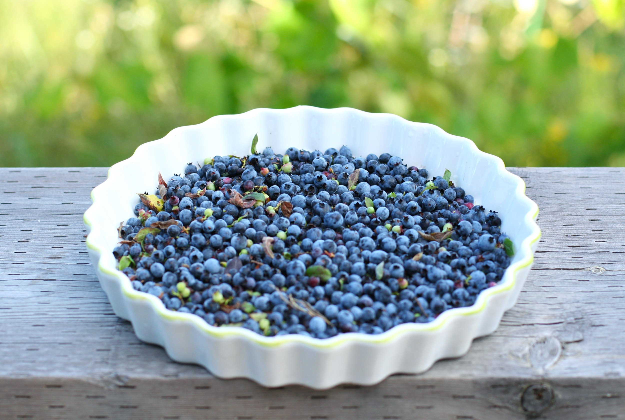 blueberry dish.jpg