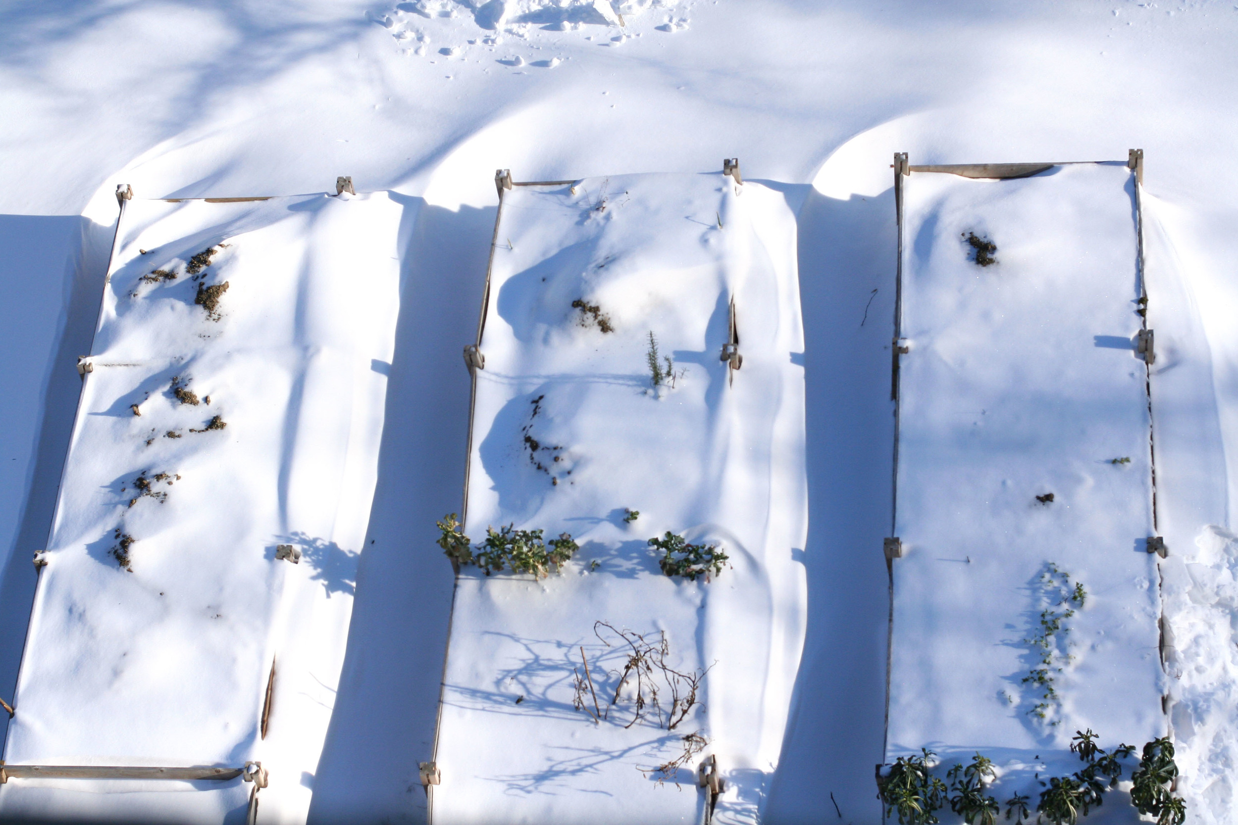 snow raised beds.jpg