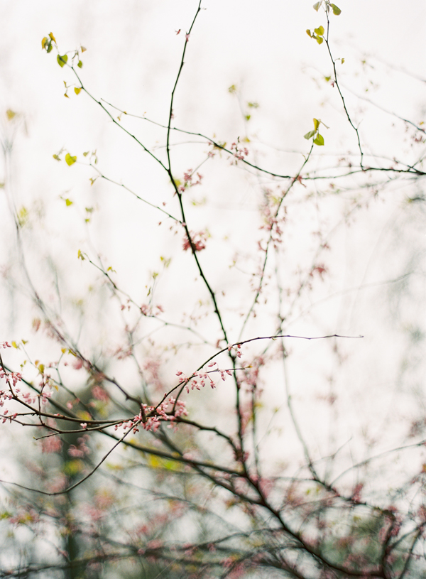 pink-spring-buds-blossoms-branches-march.jpg