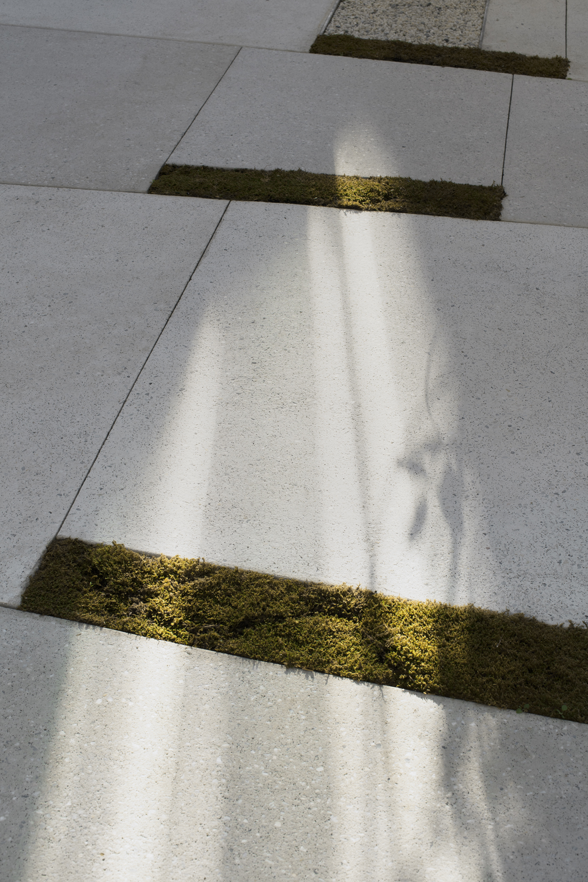 REED HILDERBRAND LANDSCAPE ARCHITECTS / Poetry Foundation / Chicago