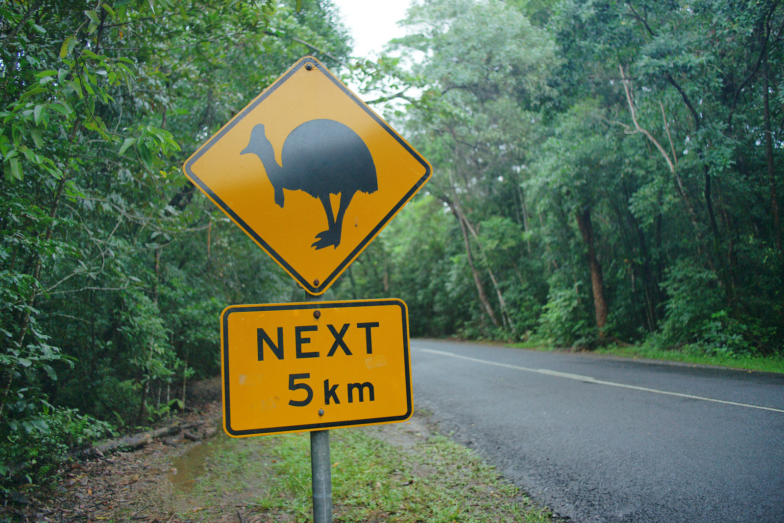 "Beware of 6ft tall Cassowaries ""The most dangerous bird in the world"" (Queensland, Australia)"
