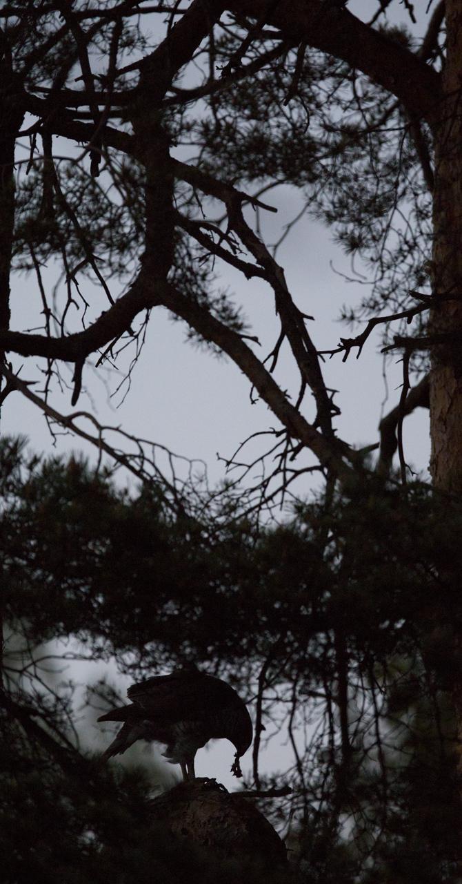 illan hämärtyessä rastasbaari on vielä hetken auki
