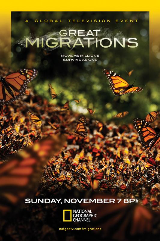 Great Migrations- Butterflies