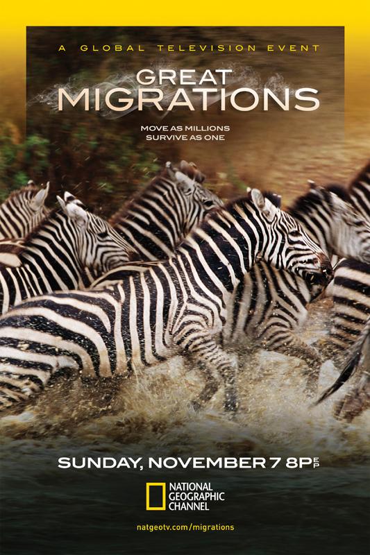 Great Migrations- Zebras