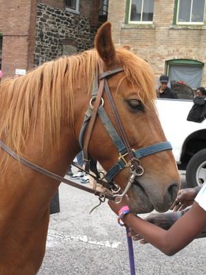 city ranch horse.jpeg
