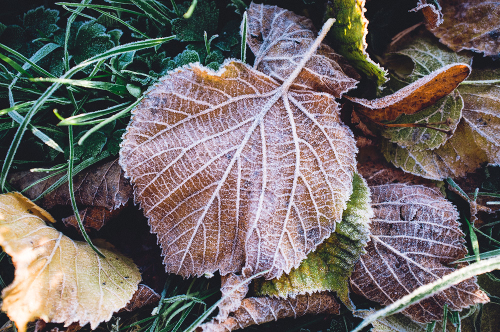 leafotp.jpg