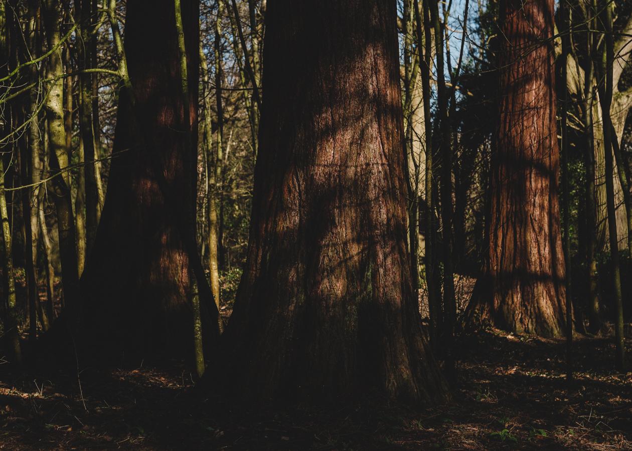 trees-3.JPG