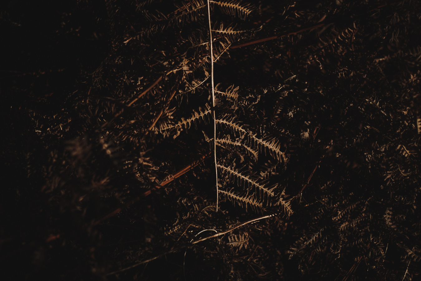 trees-4.JPG