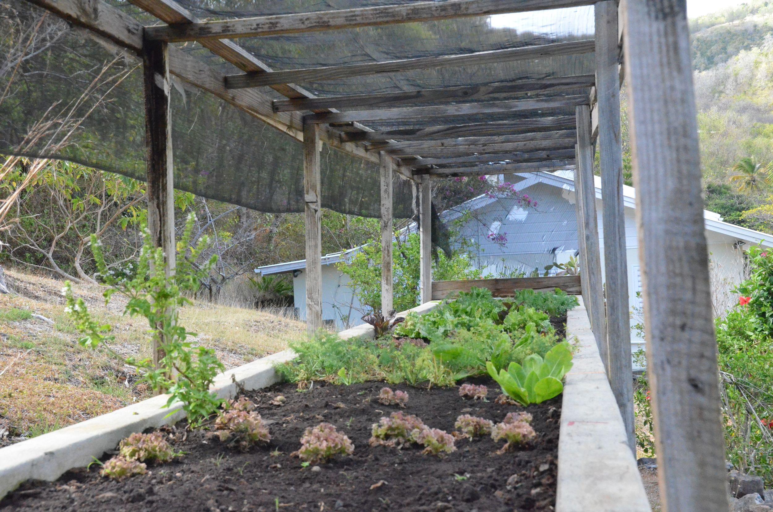 Firefly Lettuce Garden.jpg