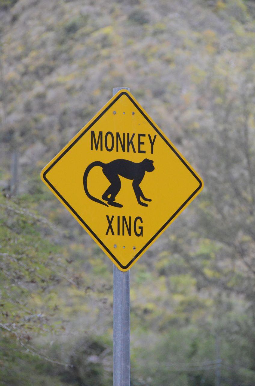 Monkey Xing.jpg