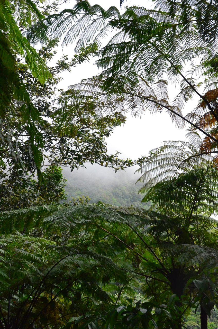 Mt Nevis Hike 3.jpg