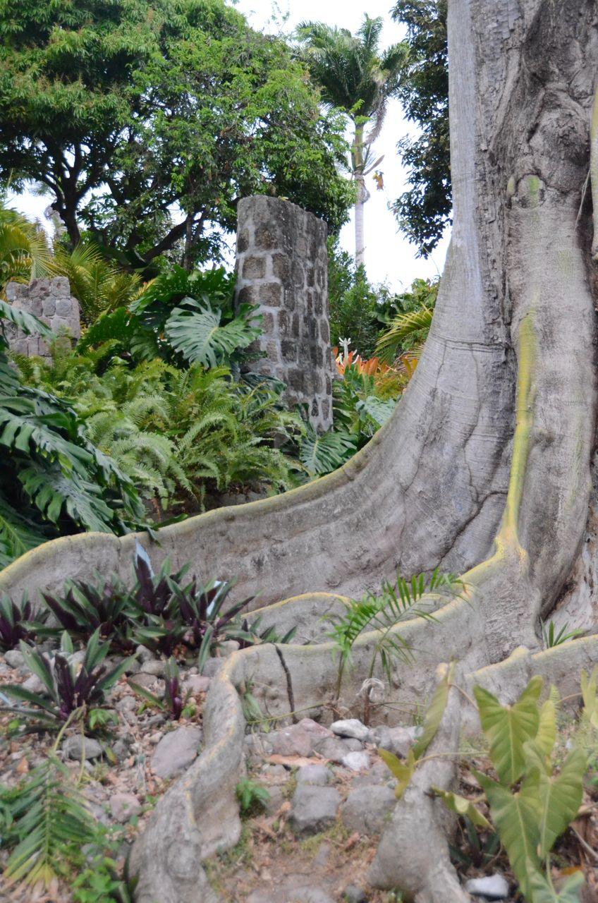 Golden Rock Tree.jpg