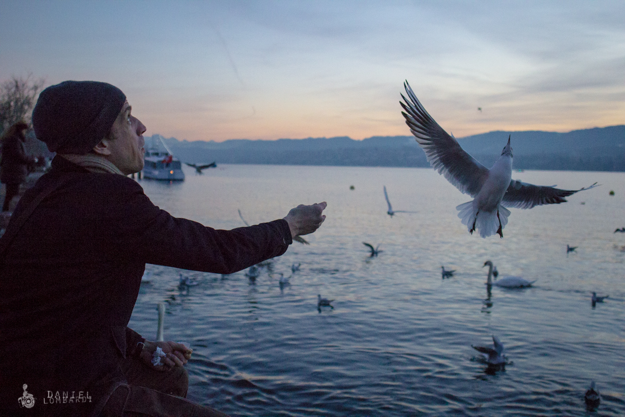 A man tosses bread crumbs to the gulls on the shore of Lake Zurich, Switzerland, as he waits for the New Year's Eve festivities to begin.   Click image to enlarge.