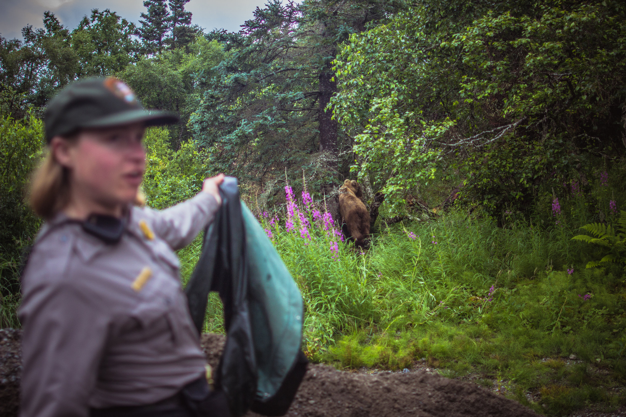 Often the Bear Techs find that the sounds of breaking sticks or rustling a raincoat are more effective at hazing the bears than yelling or clapping.