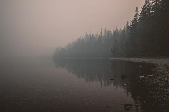 September 7, 2017. The Sprague Fire is 13,343 acres.  The smoke is so thick I can't see across the street. I want to leave this place for somewhere civilized. The animals seem to feel the same. Yesterday I saw a grizzly bear lying in a creek. There are bugs everywhere. Large western conifer seed bugs crawl lethargically through the crack under the door. Hemlock looper moths swarm street lights that remain lit well into the day for the dimming effect of the smoke.