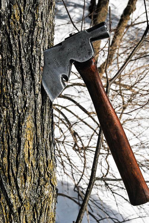 axe tree.jpg