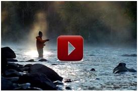 videos DO banner.jpg