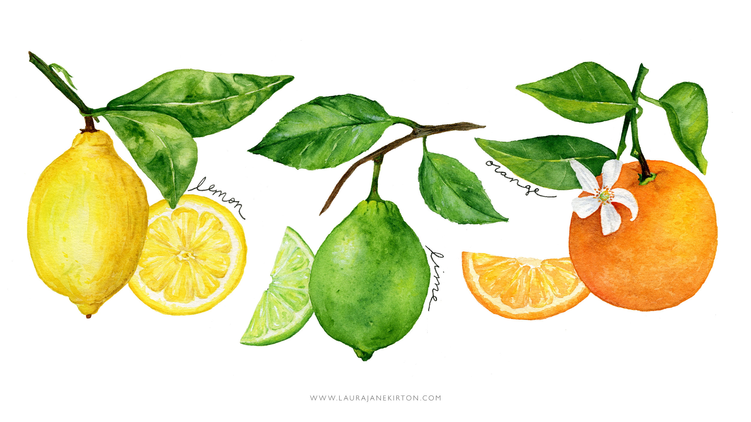 citrusbackground.JPG