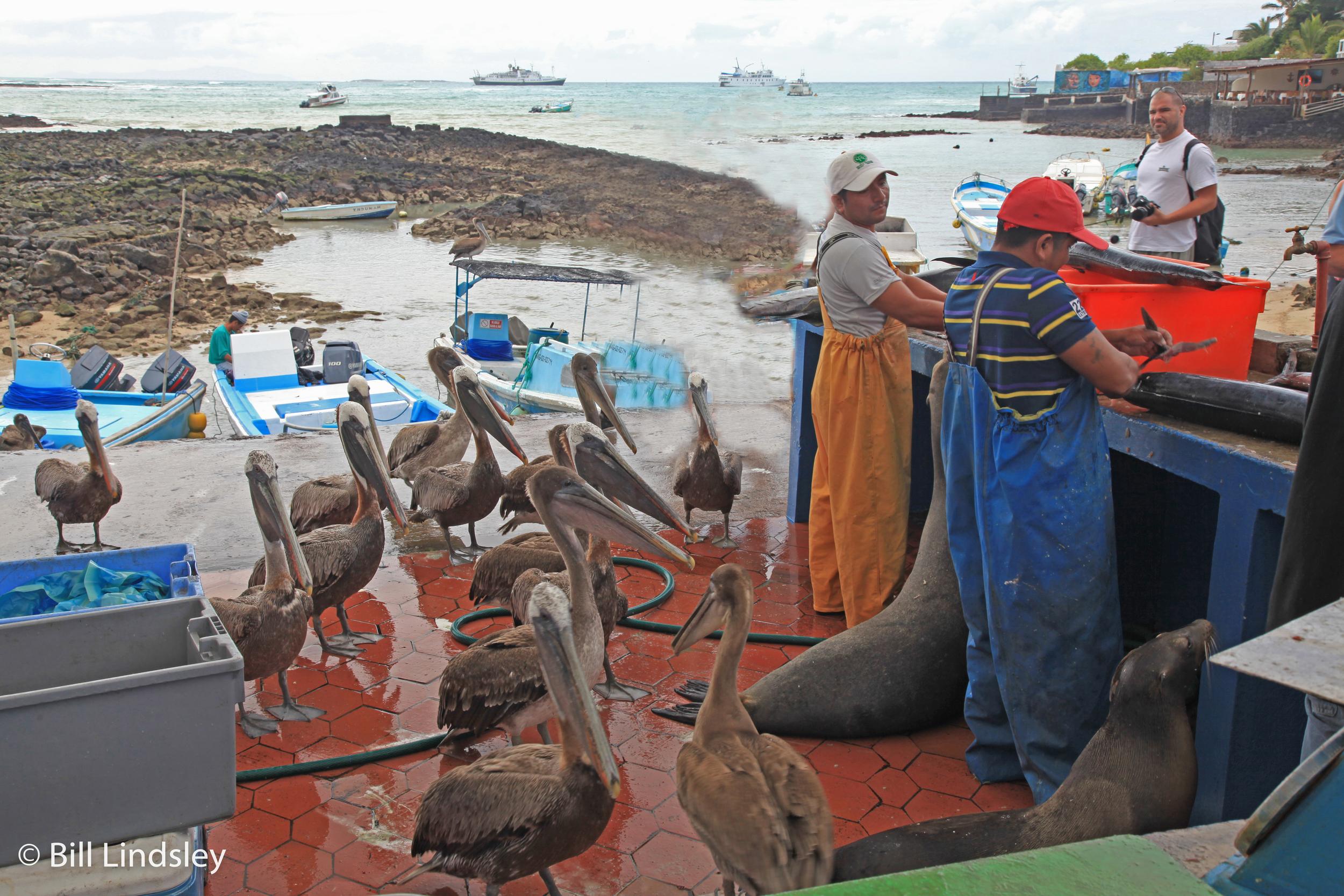 Puerto Ayora, Santa Cruz, Galapagos