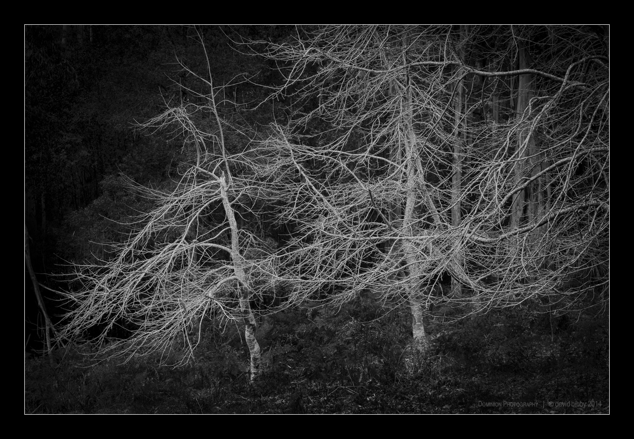 Darkness5.jpg