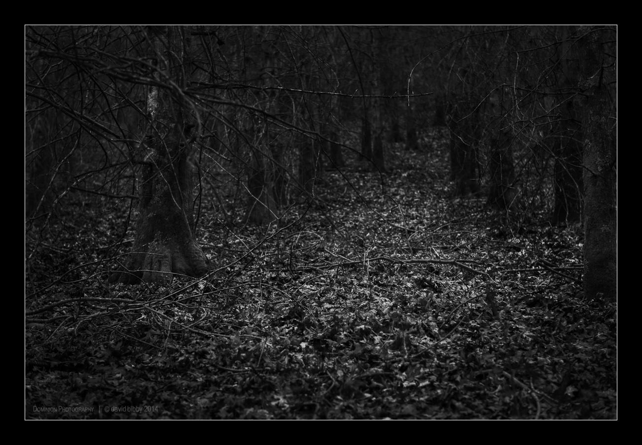 Darkness6.jpg
